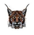 lynx head portrait from a splash watercolor vector image vector image