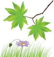 maple leaves grass and a flower vector image vector image