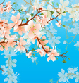 blossoming tree branch vector image vector image