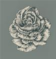 vintage rose vector image vector image