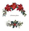 christmas plants vector image vector image