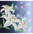Greeting or invitation card with lily flower vector image vector image