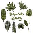 hand drawn botanical vector image