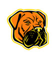 bullmastiff dog mascot vector image vector image