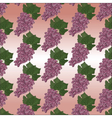 Grapes clusters pattern vector image vector image