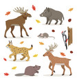 set of forest wild animals isolated on white vector image vector image