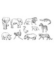 sketch animal african wild savanna fauna vector image