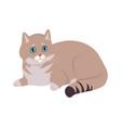 european shorthair cat flat vector image vector image