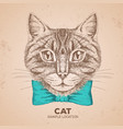 hipster animal cat hand drawing muzzle of animal vector image vector image