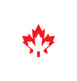 maple leaf icon design template isolated vector image vector image