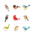 printset colorful birds isolated on white vector image vector image