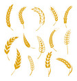 set of simple wheats ears icons and grain design vector image vector image