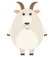 white goat on white background vector image