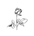 black sketch of rose on white background vector image vector image