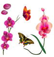 butterfly pink orchid white background imag vector image