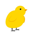 little yellow chicken simple icon vector image