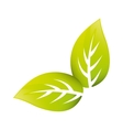 Leaves natural concept vector image