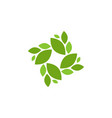 natural leaf graphic design template isolated vector image