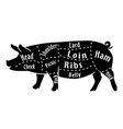 cut of pork diagram for butcher pork cut vector image