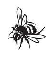 engraving of honey flying bee isolated on white vector image vector image
