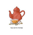 tea with thyme - healthy herbal drink in glass vector image vector image