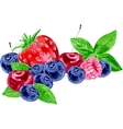 watercolor berries vector image