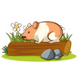 isolated picture hamster on log vector image vector image
