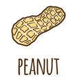 peanut in shell icon hand drawn style vector image vector image