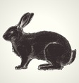 rabbit vintage vector image vector image