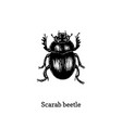 scarab beetle drawn insect in vector image