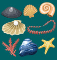 sea marine animals and shells souvenirs cartoon vector image