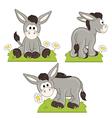 set isolated donkey in meadow vector image vector image