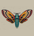 colorful beautiful butterfly in vintage style vector image vector image