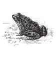 cystignathidae vintage vector image vector image