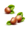Full Unpeeled Realistic Hazelnuts with Leaves vector image vector image