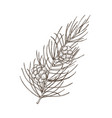 hand drawn beautiful botanical drawing of pine vector image vector image