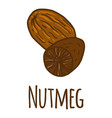 nutmeg icon hand drawn style vector image vector image