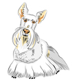 dog breed scottish terrier vector image vector image