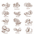 doodle nuts hand drawn set isolate vector image