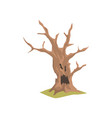 old dry tree with scary face natural element for vector image vector image