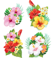 Arrangement from hibiscus flowers vector image vector image