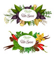 herbs and hot spices seasonings banners vector image vector image