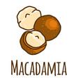 macadamia icon hand drawn style vector image vector image