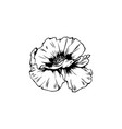 poppy blossom with bud black ink vector image vector image