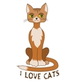 Ginger cat sitting alone on white background vector image