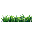 Green elongated grasses vector image vector image