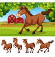 horses at the farmland vector image vector image