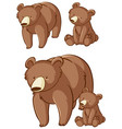 isolated picture grizzly bears vector image