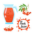 juice with ashberry in a glass jug cartoon vector image