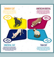 purebred cats isometric infographics vector image